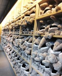 Shelf of Anteaters